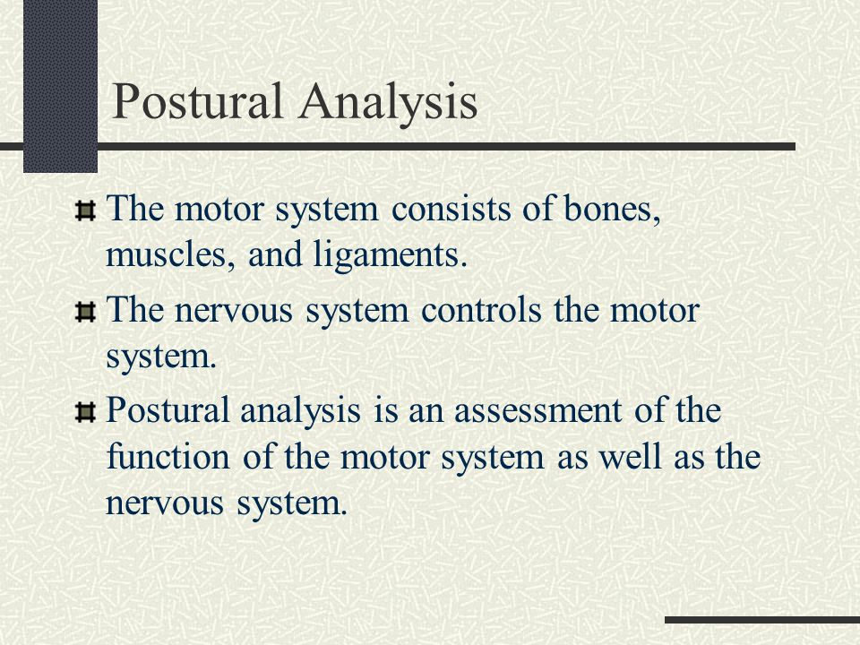 Postural Analysis The motor system consists of bones, muscles, and ligaments. The nervous system controls the motor system.