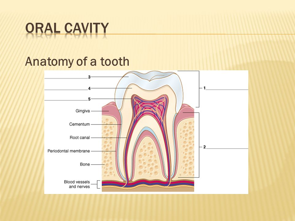 Oral Cavity Anatomy of a tooth Quiz students to complete labels.