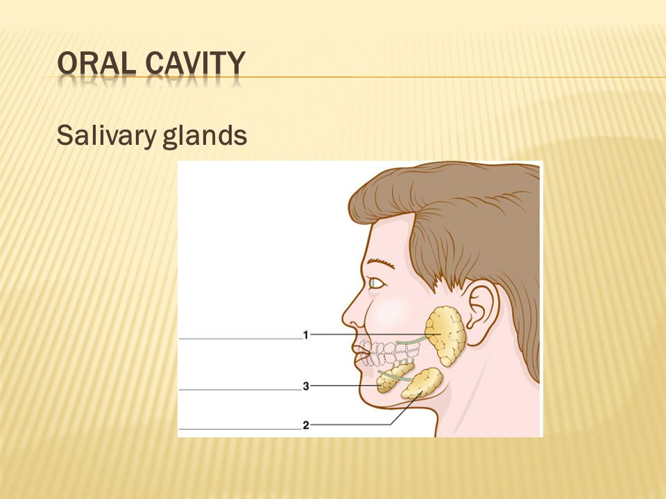 Oral Cavity Salivary glands Quiz students to complete labels.