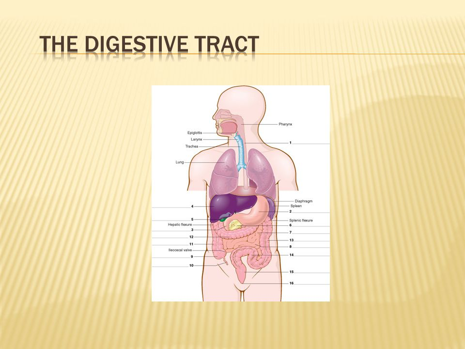 The Digestive Tract Quiz students to complete labels.