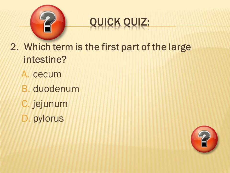 QUICK QUIZ: 2. Which term is the first part of the large intestine