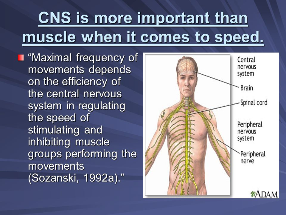 CNS is more important than muscle when it comes to speed.