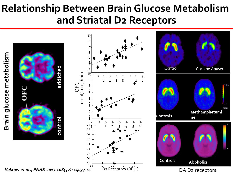 Relationship Between Brain Glucose Metabolism