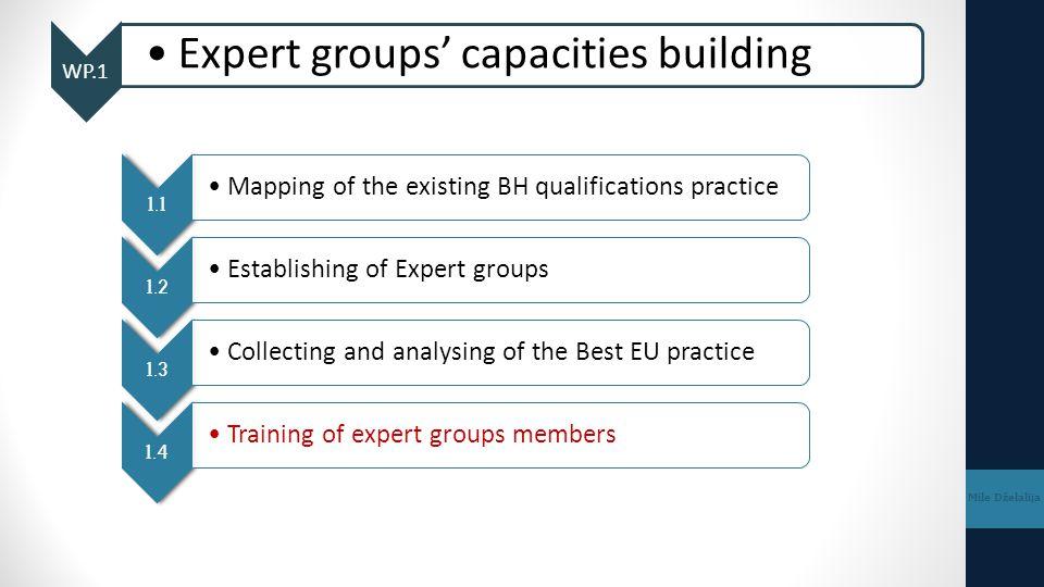 Expert groups' capacities building