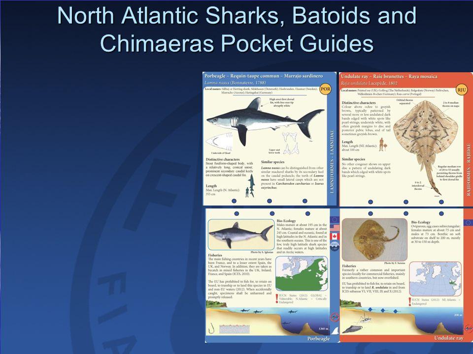 North Atlantic Sharks, Batoids and Chimaeras Pocket Guides