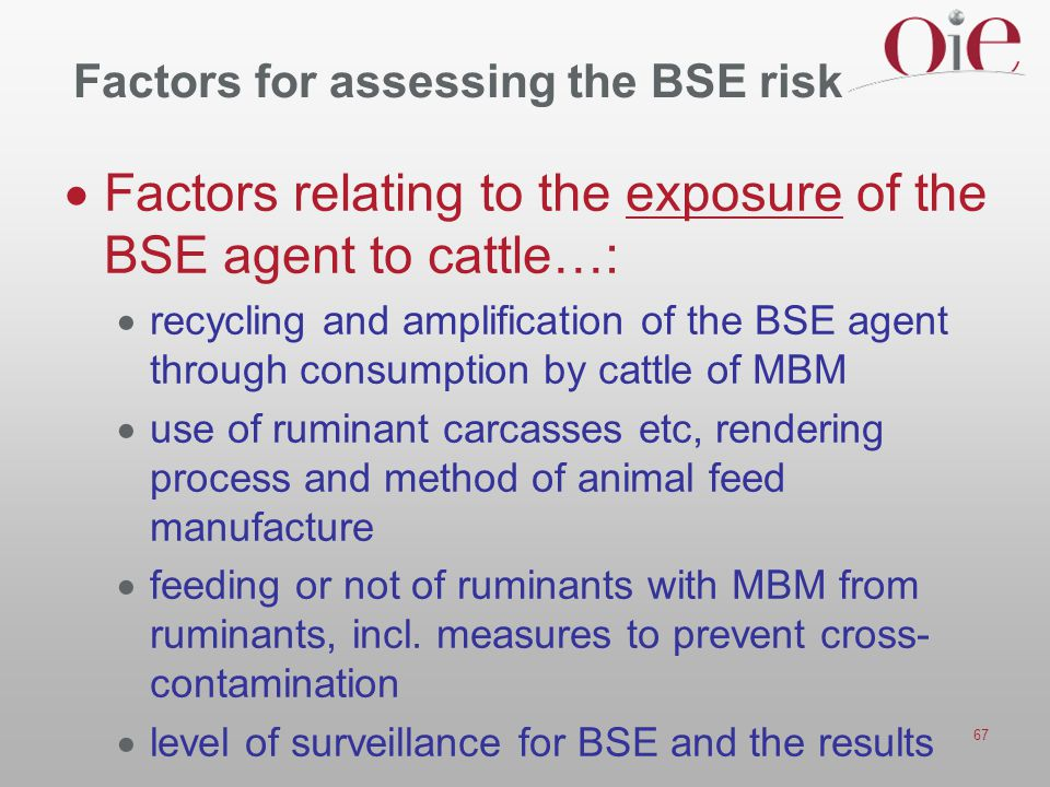 Factors for assessing the BSE risk