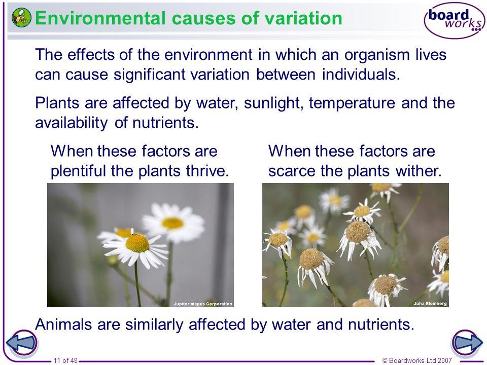 Environmental causes of variation