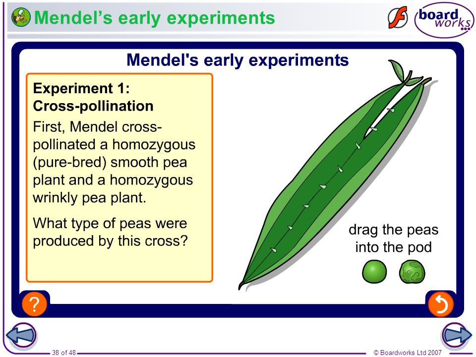 Mendel's early experiments