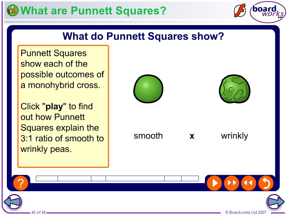What are Punnett Squares
