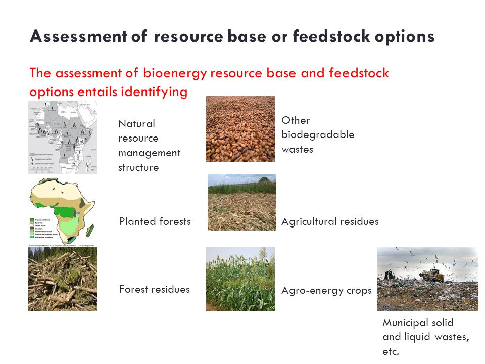 Assessment of resource base or feedstock options