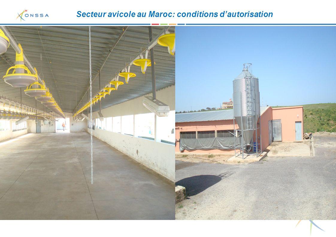 Secteur avicole au Maroc: conditions d'autorisation