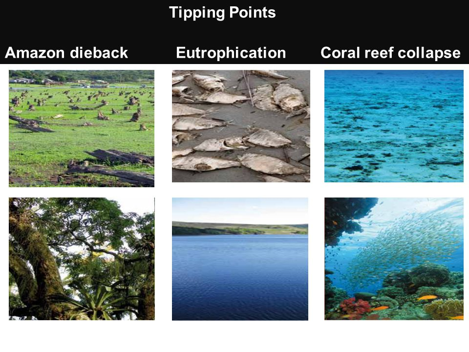 Amazon dieback Eutrophication Coral reef collapse
