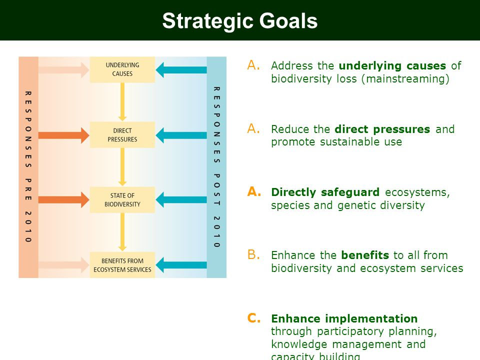 Strategic Goals Address the underlying causes of biodiversity loss (mainstreaming) Reduce the direct pressures and promote sustainable use.