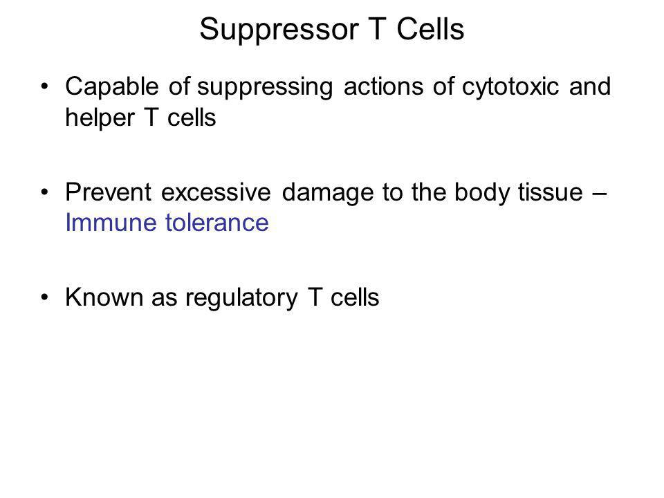 Suppressor T CellsCapable of suppressing actions of cytotoxic and helper T cells. Prevent excessive damage to the body tissue – Immune tolerance.