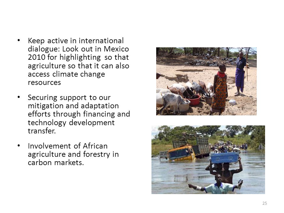 Involvement of African agriculture and forestry in carbon markets.