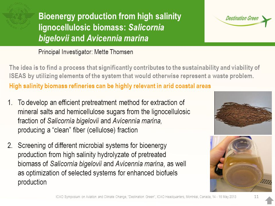 Bioenergy production from high salinity