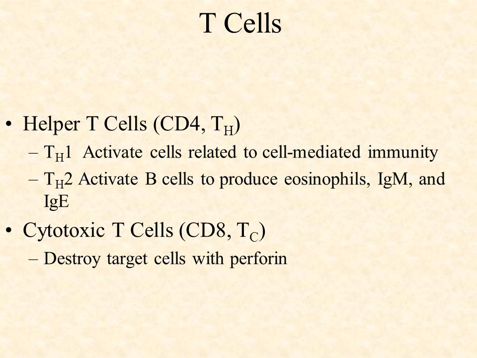 T Cells Helper T Cells (CD4, TH) Cytotoxic T Cells (CD8, TC)