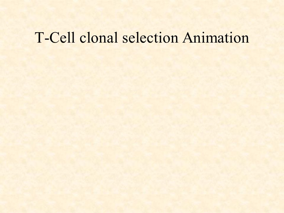 T-Cell clonal selection Animation
