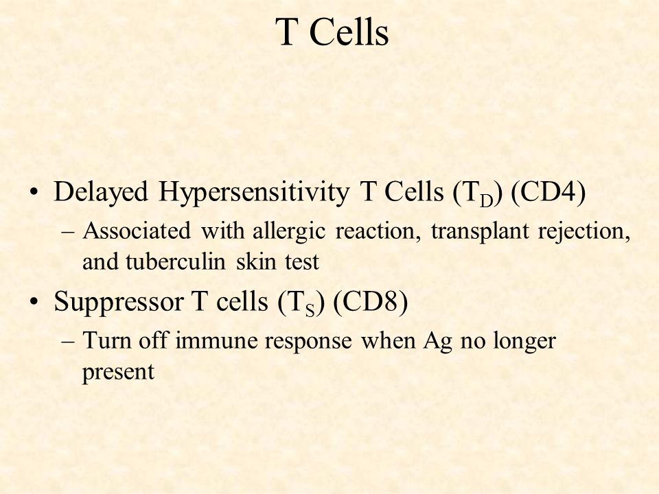 T Cells Delayed Hypersensitivity T Cells (TD) (CD4)