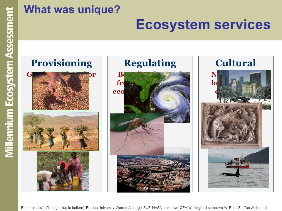 What was unique Ecosystem services