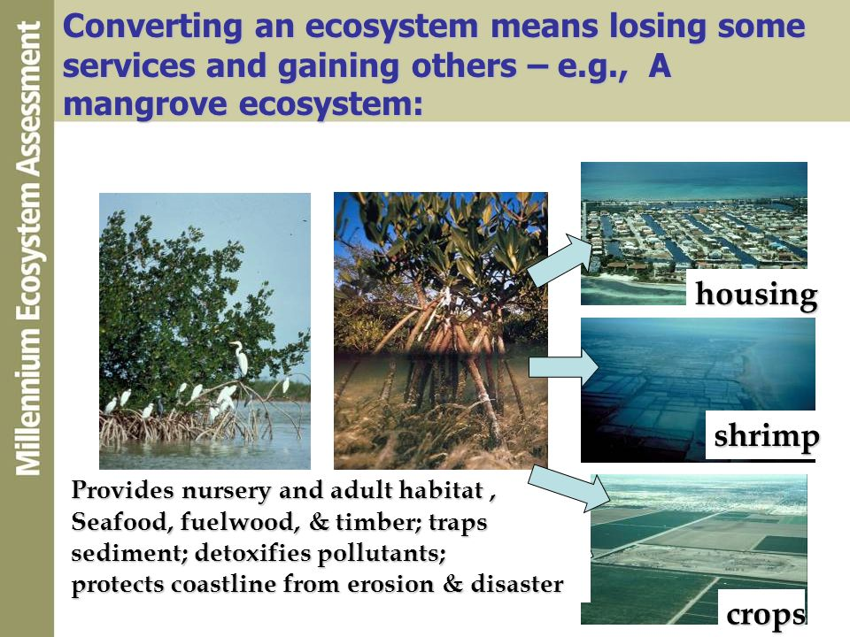 Converting an ecosystem means losing some services and gaining others – e.g., A mangrove ecosystem: