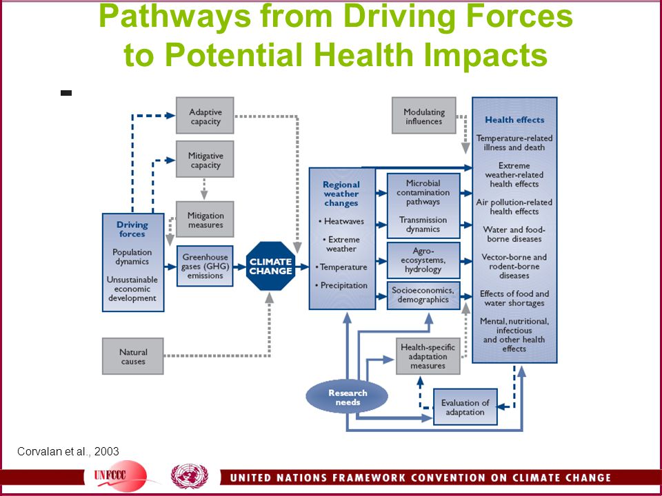 Pathways from Driving Forces to Potential Health Impacts