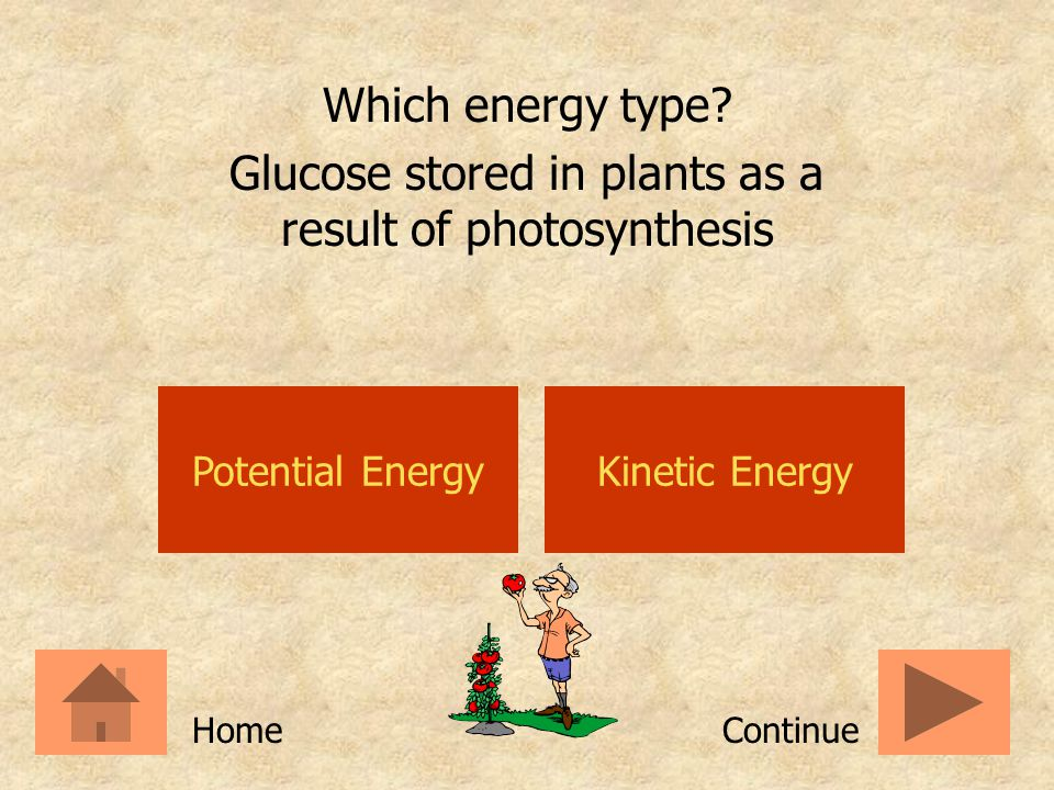 Glucose stored in plants as a result of photosynthesis