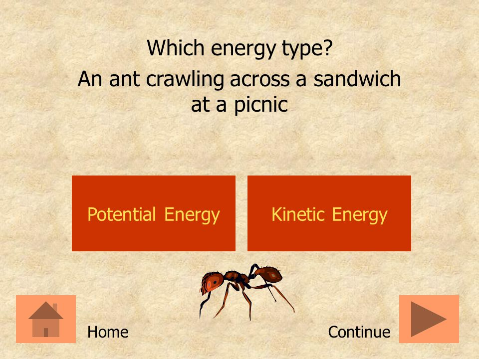 An ant crawling across a sandwich at a picnic