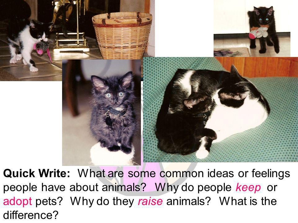 Quick Write: What are some common ideas or feelings people have about animals.