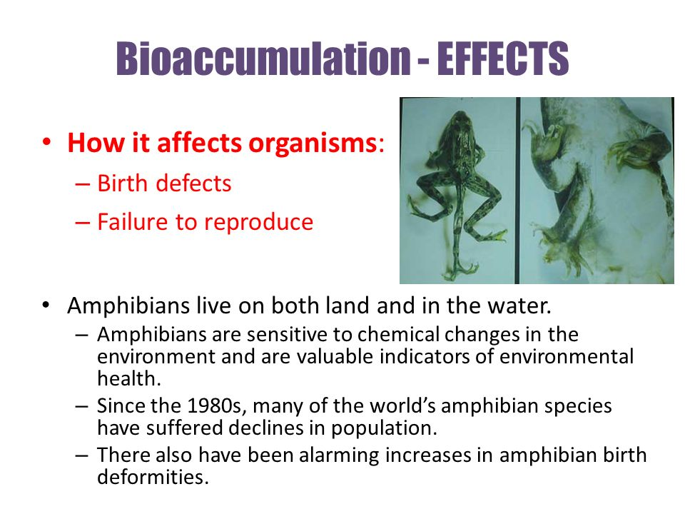 Bioaccumulation - EFFECTS