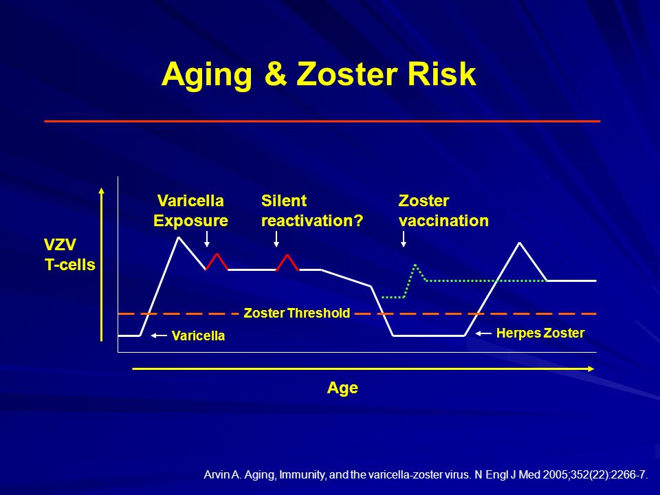 Aging & Zoster Risk Varicella Exposure Silent reactivation