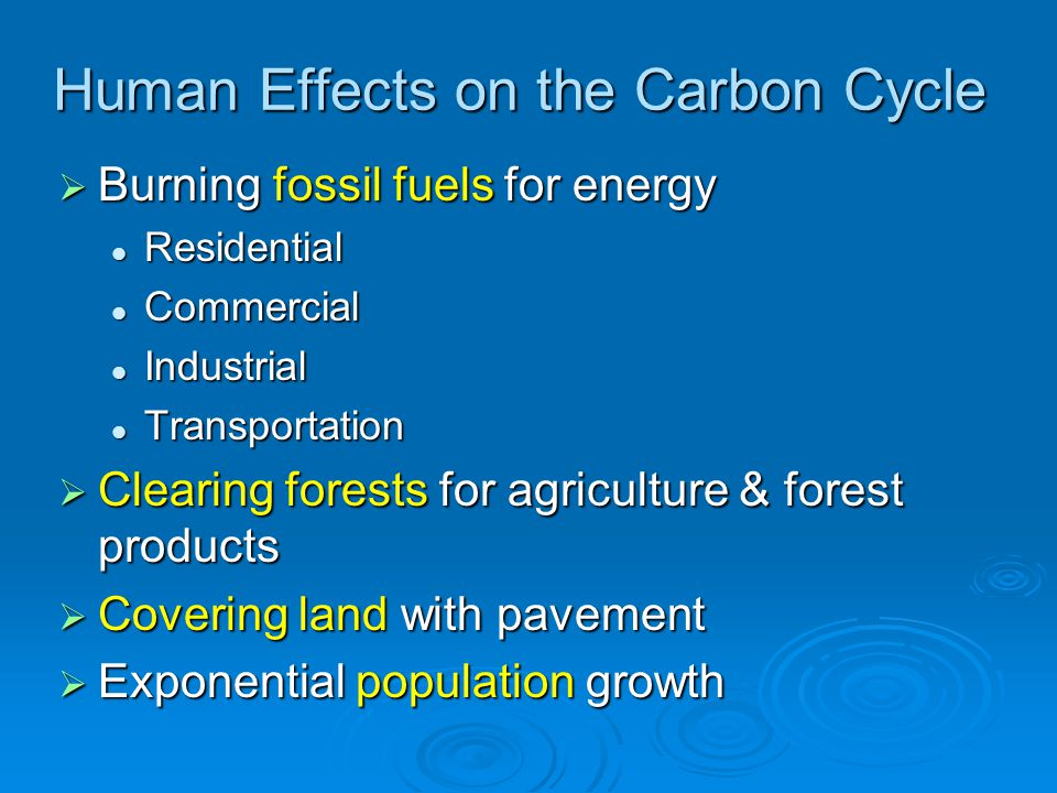Human Effects on the Carbon Cycle