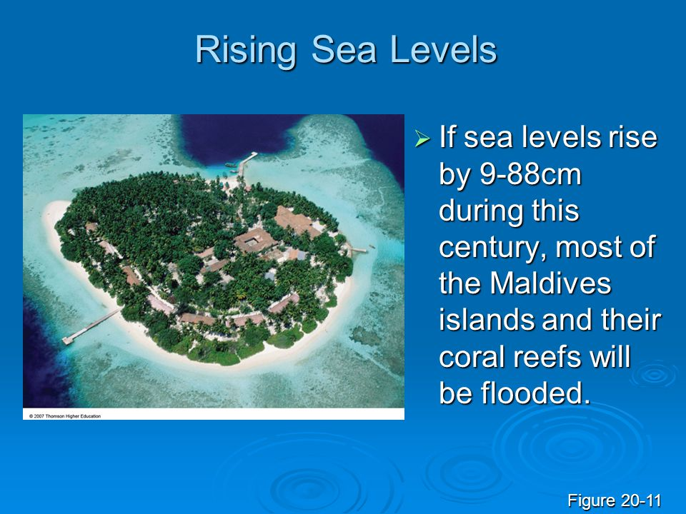 Rising Sea Levels If sea levels rise by 9-88cm during this century, most of the Maldives islands and their coral reefs will be flooded.