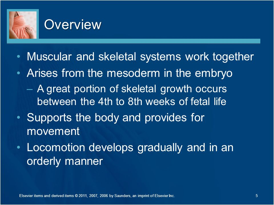 Overview Muscular and skeletal systems work together