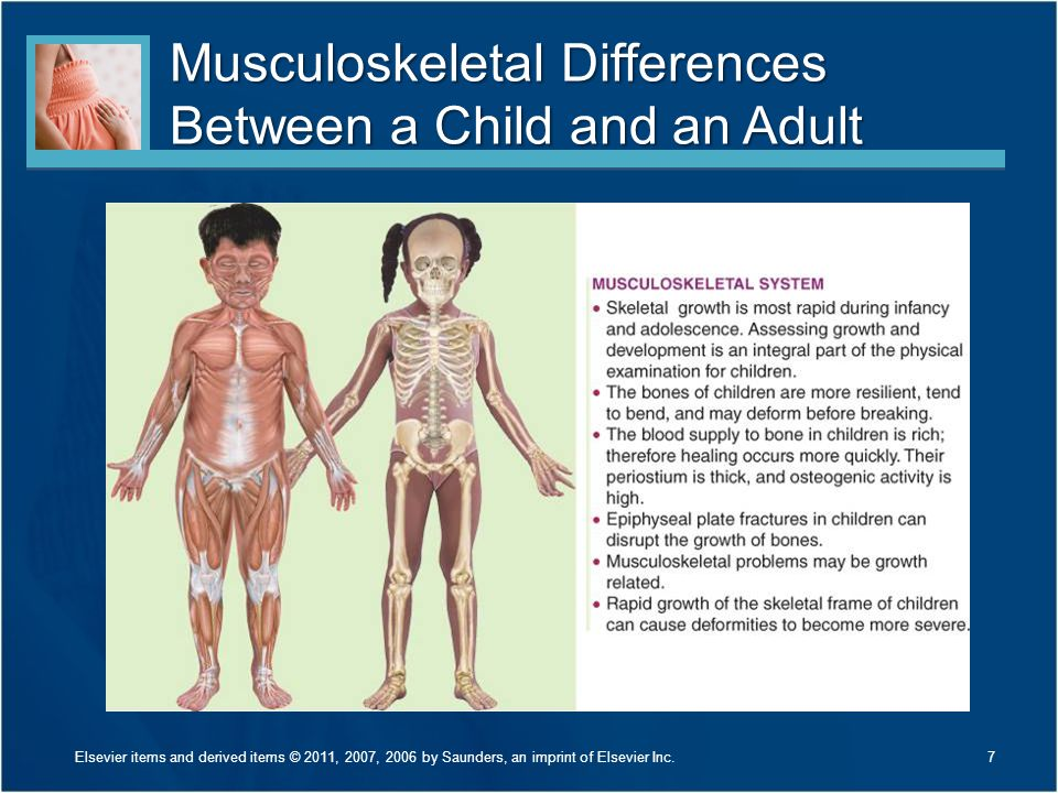 Musculoskeletal Differences Between a Child and an Adult