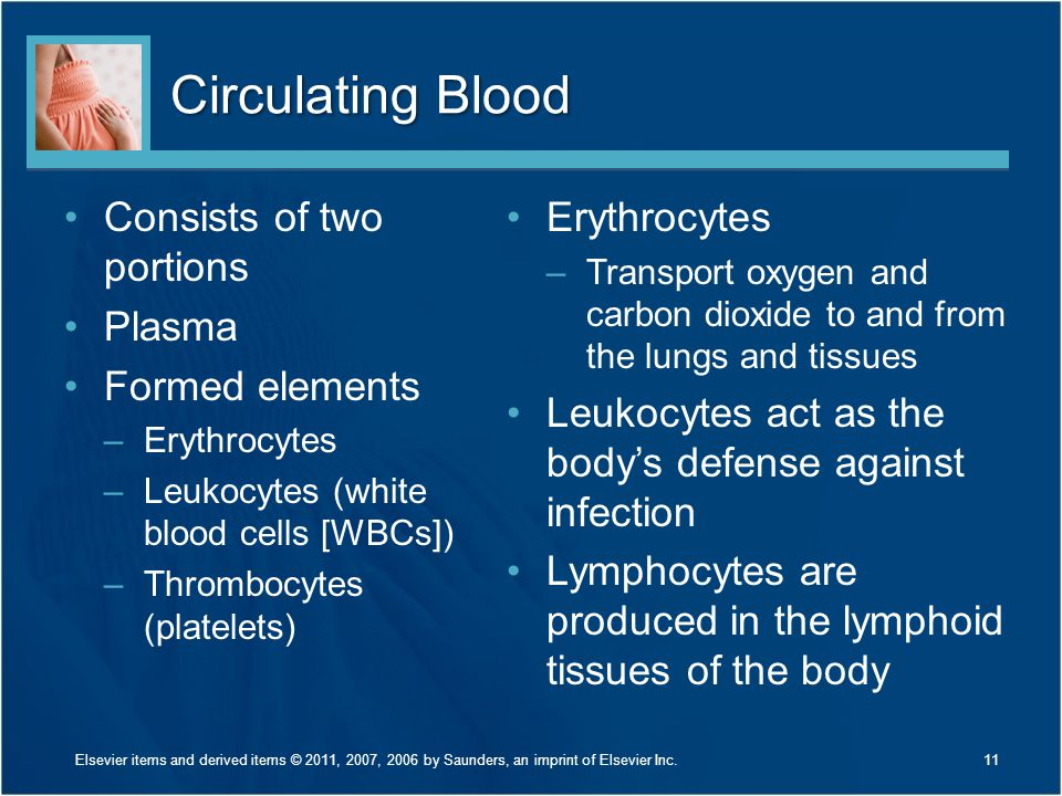 Circulating Blood Consists of two portions Plasma Formed elements