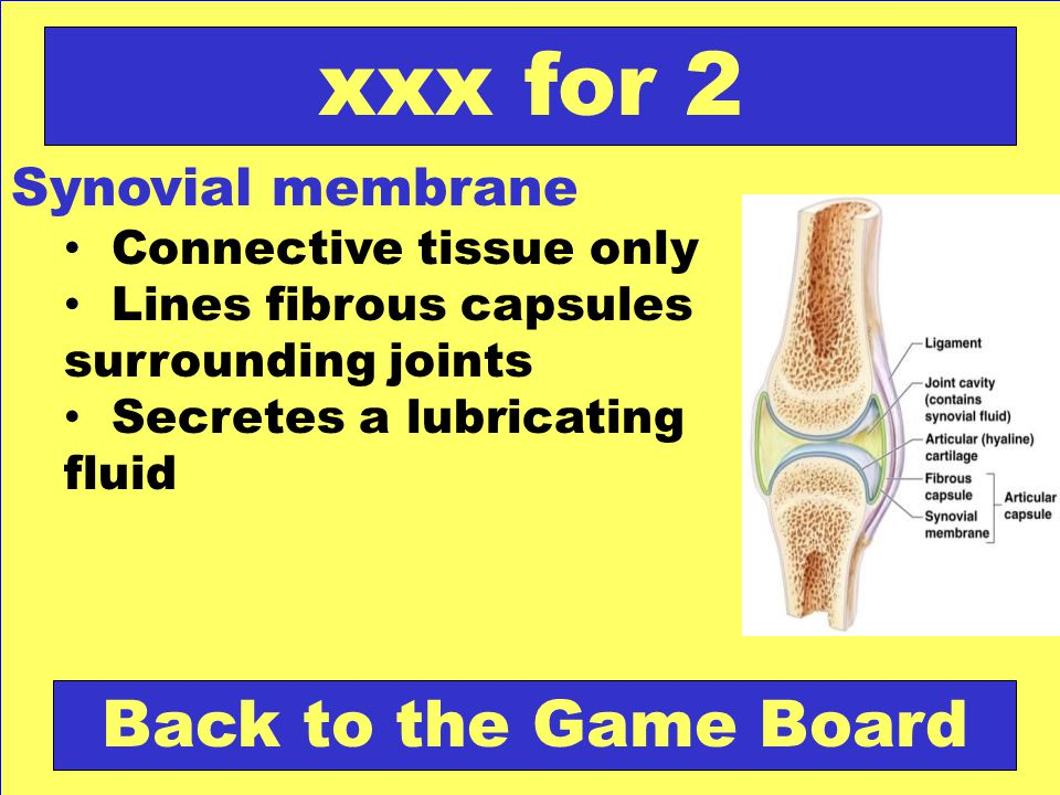 xxx for 2 Back to the Game Board Synovial membrane