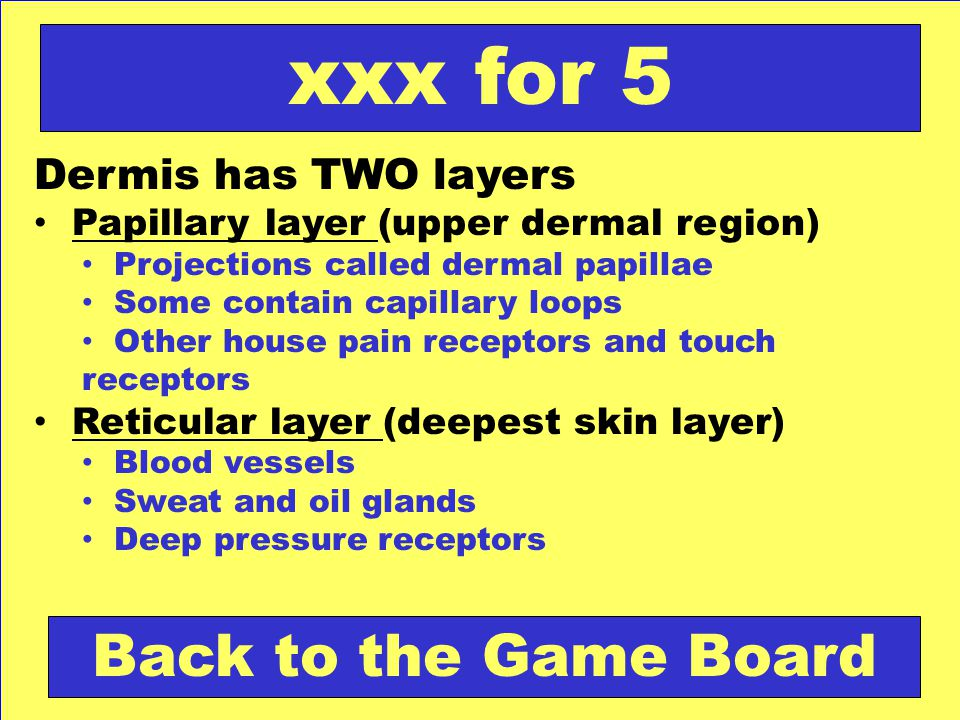 xxx for 5 Back to the Game Board Dermis has TWO layers
