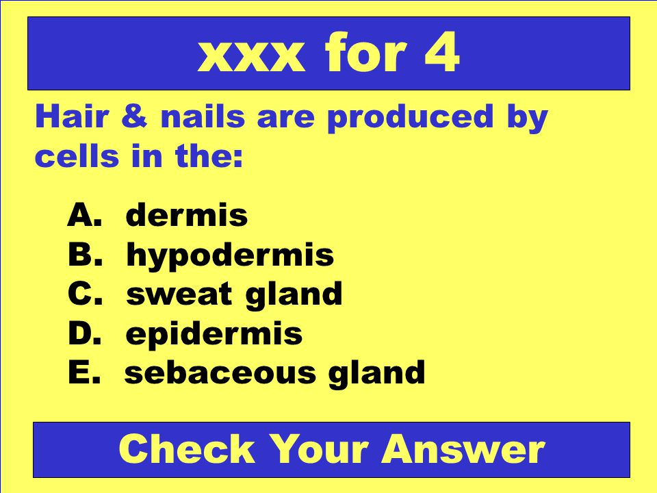 xxx for 4 Check Your Answer Hair & nails are produced by cells in the: