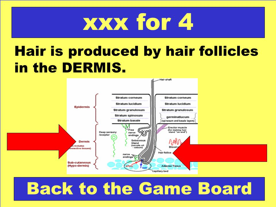 xxx for 4 Back to the Game Board