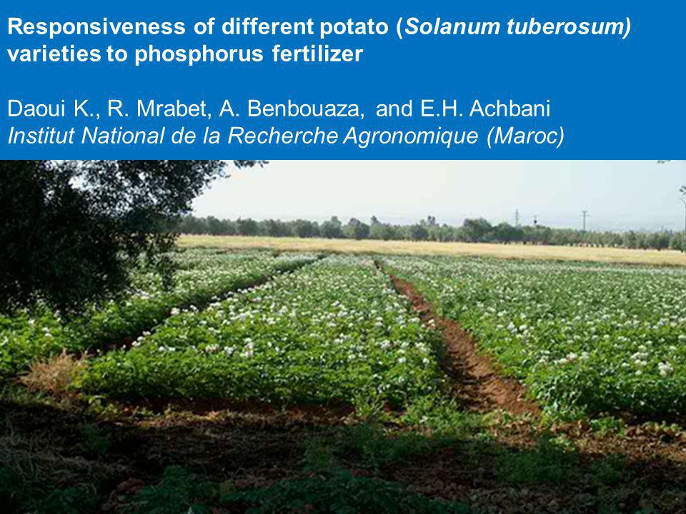 Responsiveness of different potato (Solanum tuberosum) varieties to phosphorus fertilizer