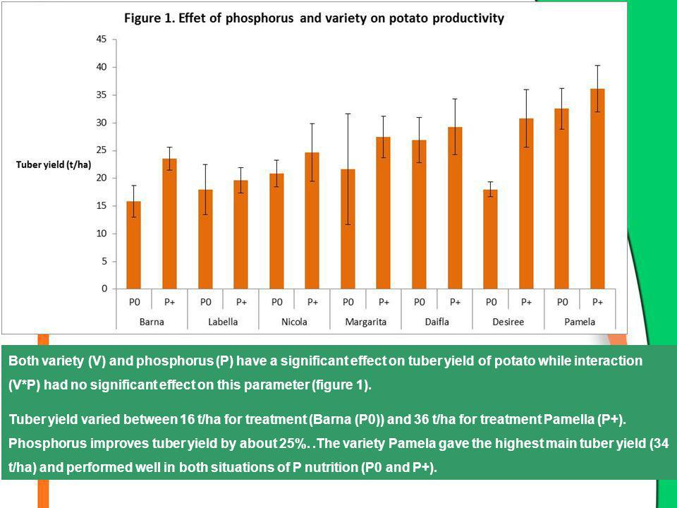Both variety (V) and phosphorus (P) have a significant effect on tuber yield of potato while interaction (V*P) had no significant effect on this parameter (figure 1).
