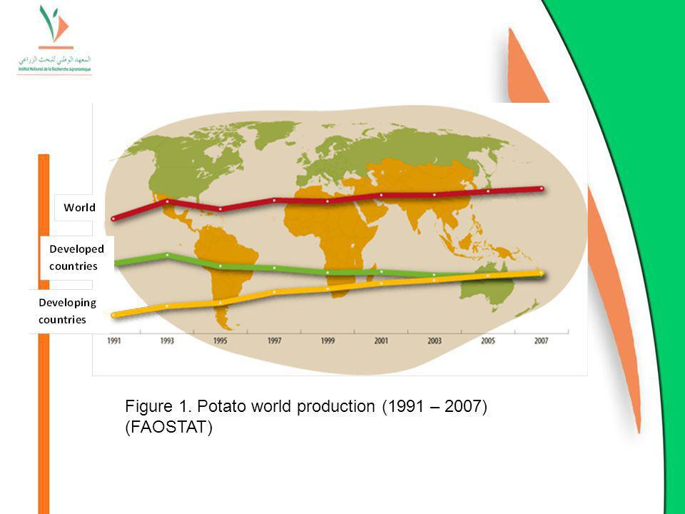 Figure 1. Potato world production (1991 – 2007) (FAOSTAT)