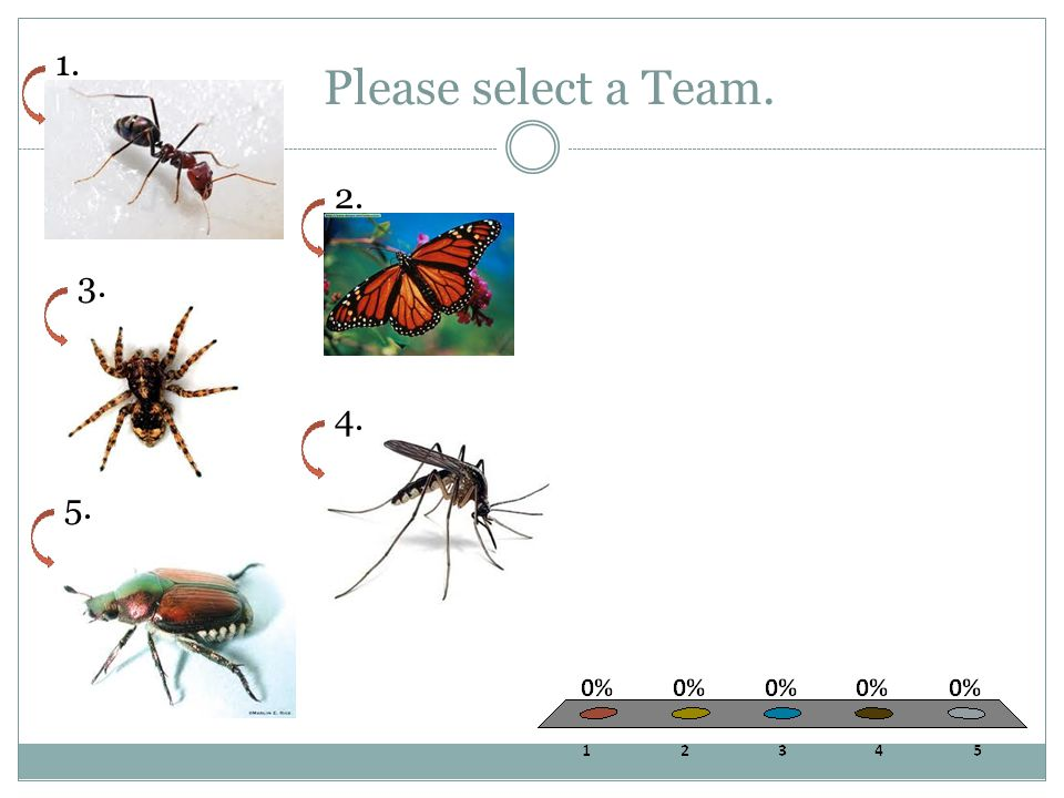Please select a Team. Ants Butterflies Spiders Mosquitoes Beetles 1.