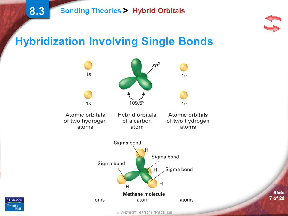 Hybridization Involving Single Bonds