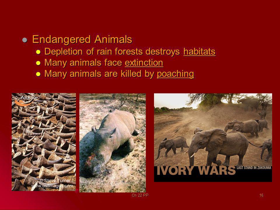 Endangered Animals Depletion of rain forests destroys habitats