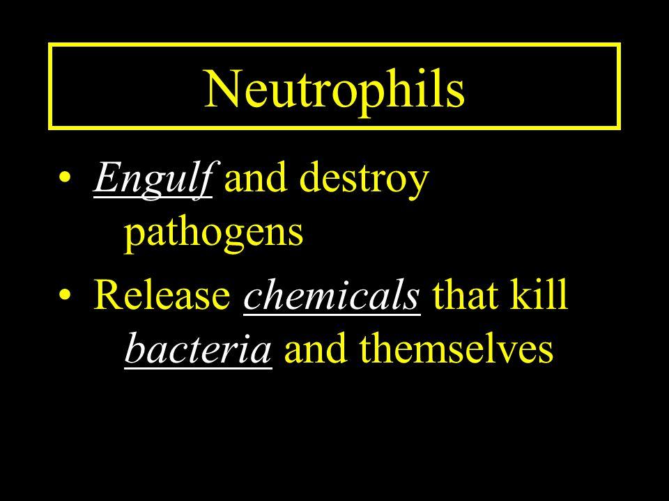 Neutrophils Engulf and destroy pathogens
