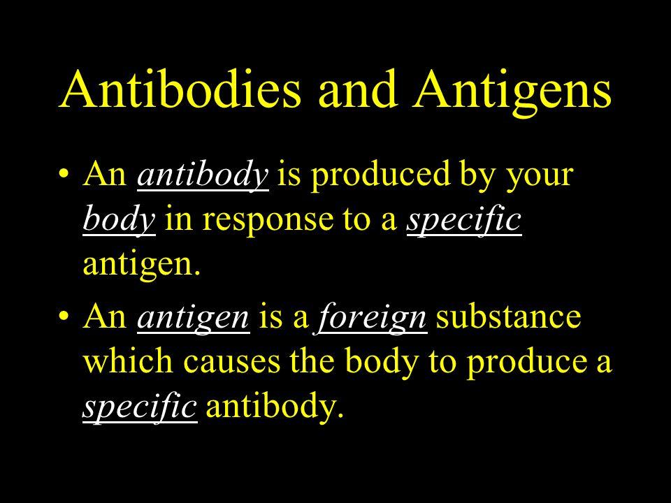 Antibodies and Antigens