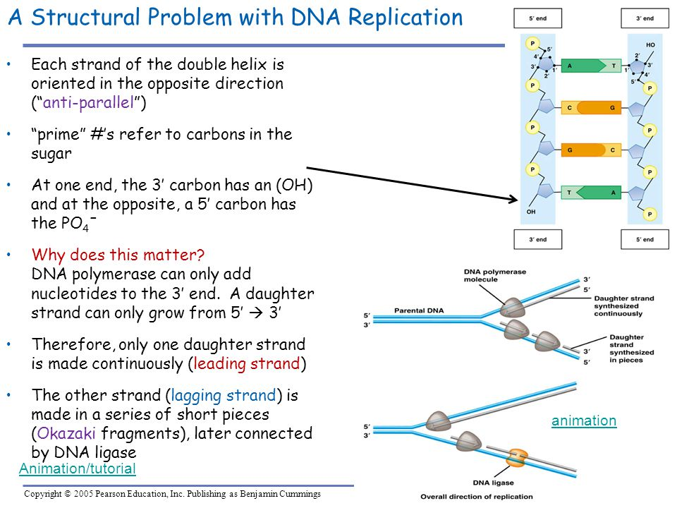 A Structural Problem with DNA Replication