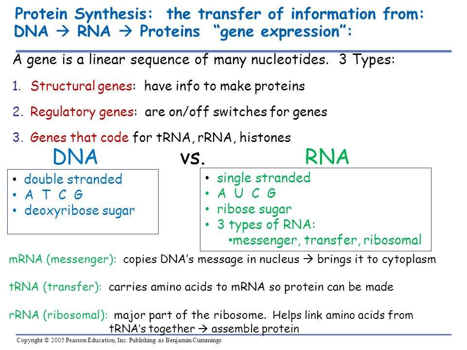 Protein Synthesis: the transfer of information from: DNA  RNA  Proteins gene expression :